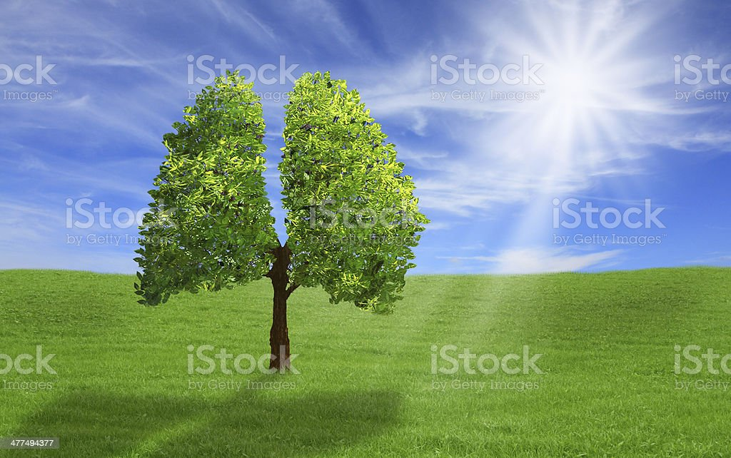 Tree in shape of lungs, eco concept. stock photo