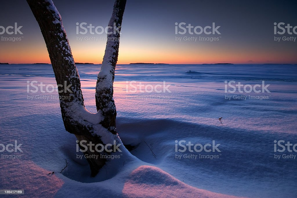 Tree in snow on the beach royalty-free stock photo