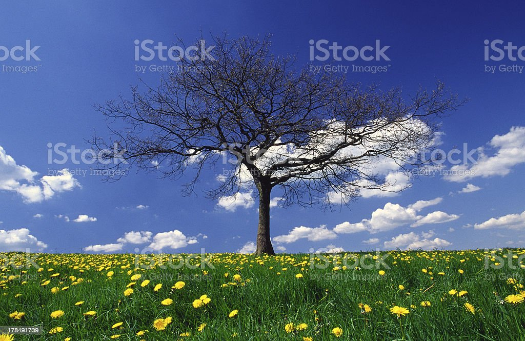 tree in spring royalty-free stock photo