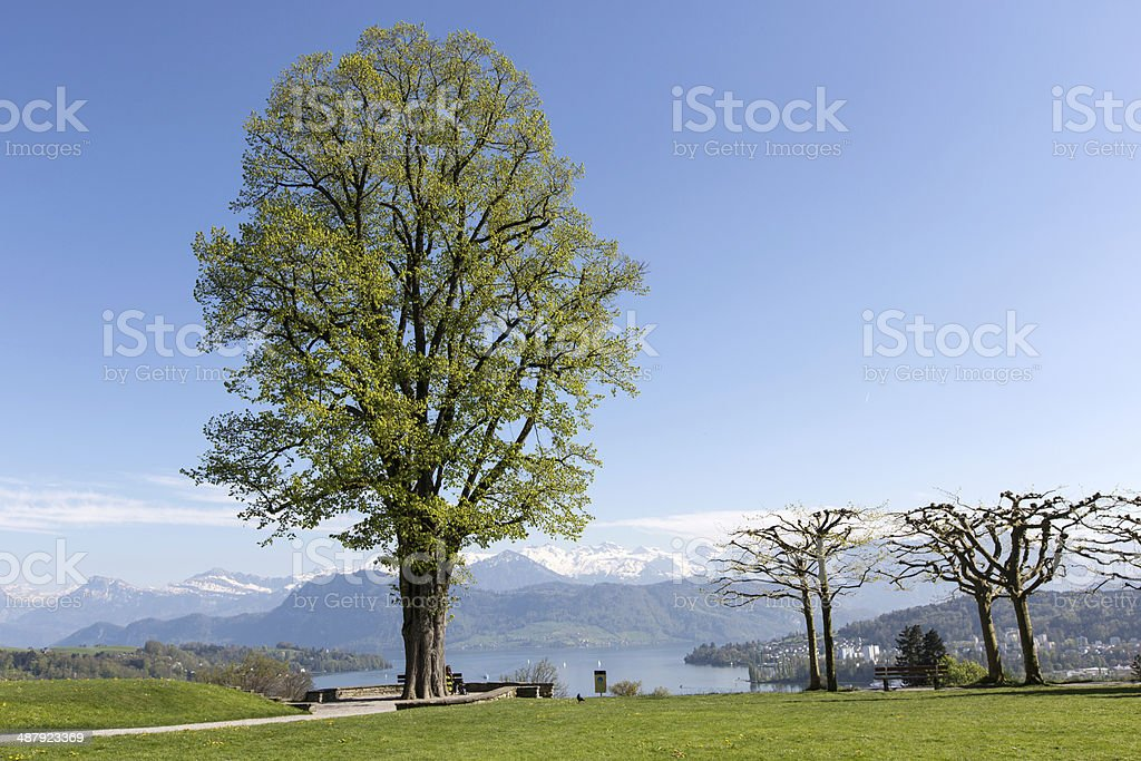 Tree in spring time royalty-free stock photo