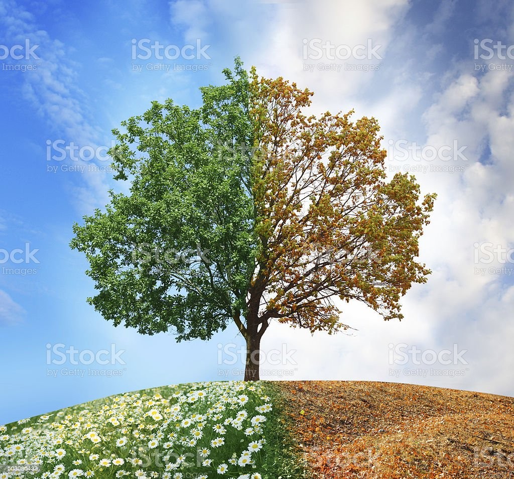 tree in summer and autumn royalty-free stock photo