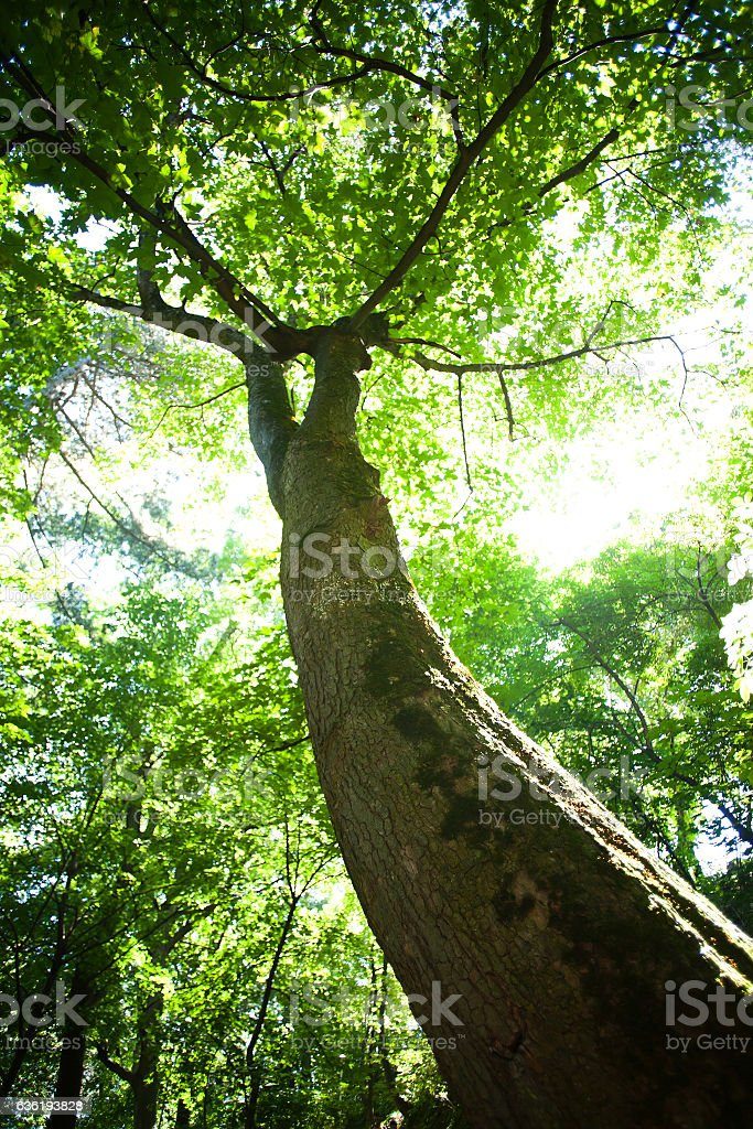 Tree in sunlight stock photo