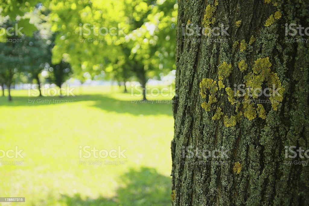 Baum im sonnigen park. Lizenzfreies stock-foto
