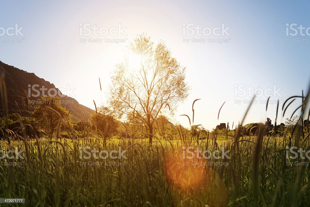 Tree in Sunset royalty-free stock photo