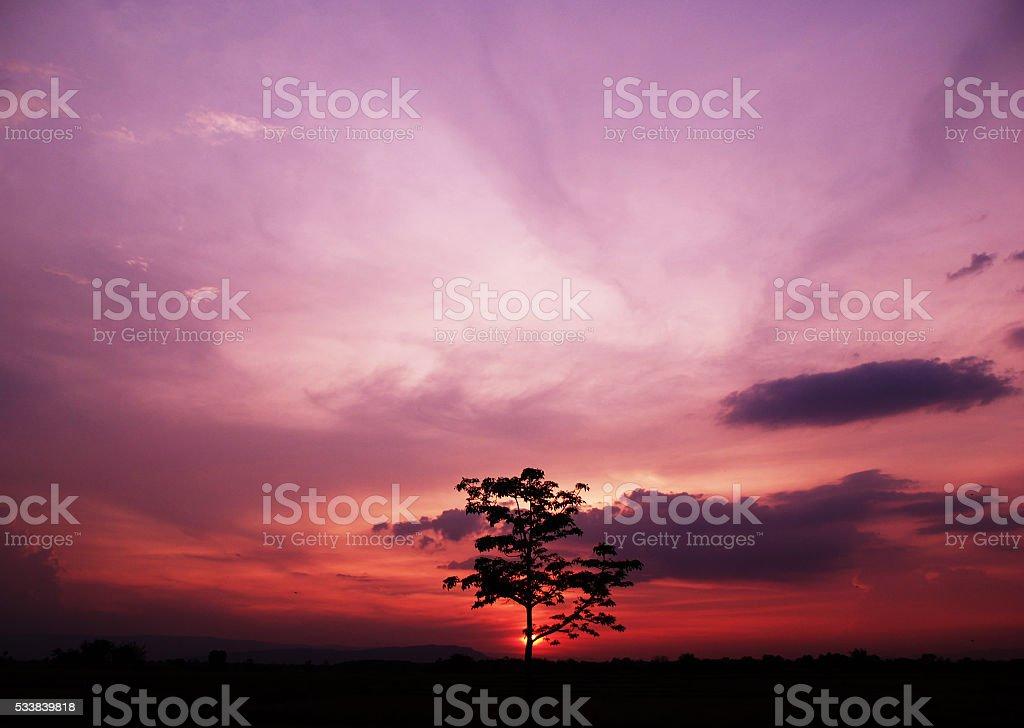 Tree in sunset stock photo