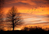 Tree in sunset time with birds