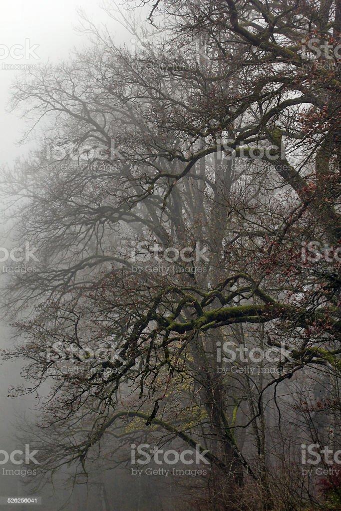 Tree in the autumn mist stock photo