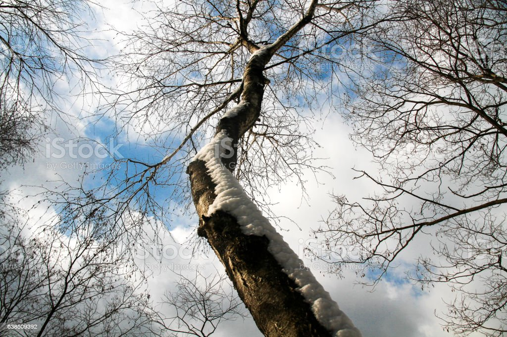 Tree in the blue sky stock photo