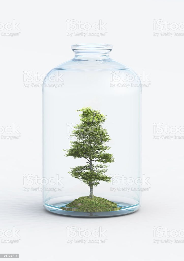 tree in the bottle royalty-free stock photo