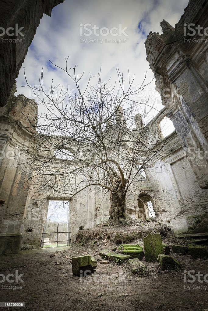 Tree in the church HDR royalty-free stock photo