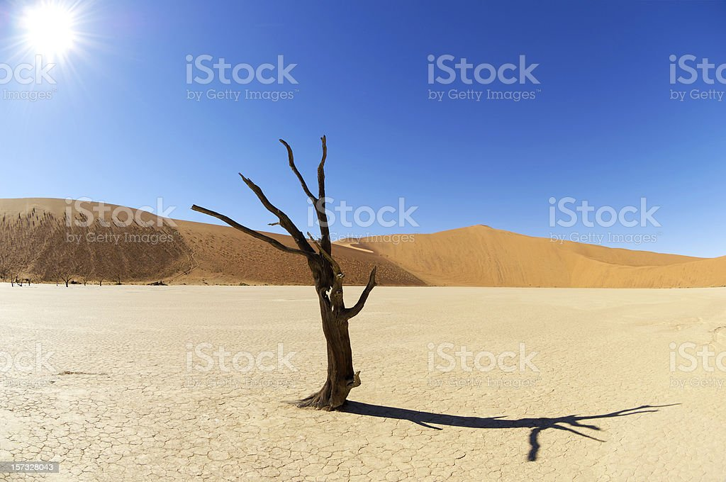 Tree in the Dead Vlei royalty-free stock photo