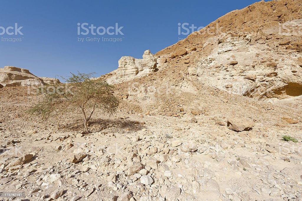Tree in the Desert royalty-free stock photo