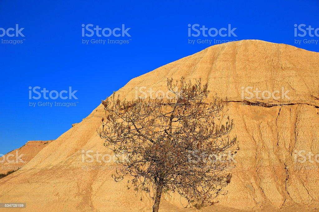 Tree in the desert-Bardenas-Spain stock photo