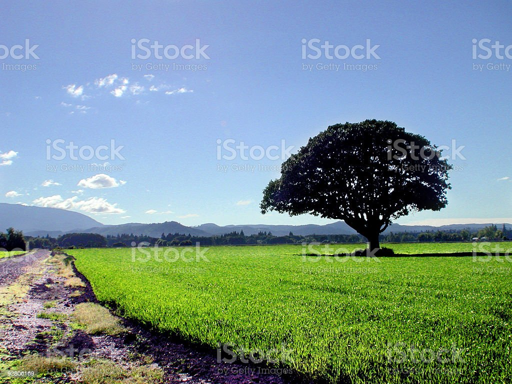 Tree in the field stock photo