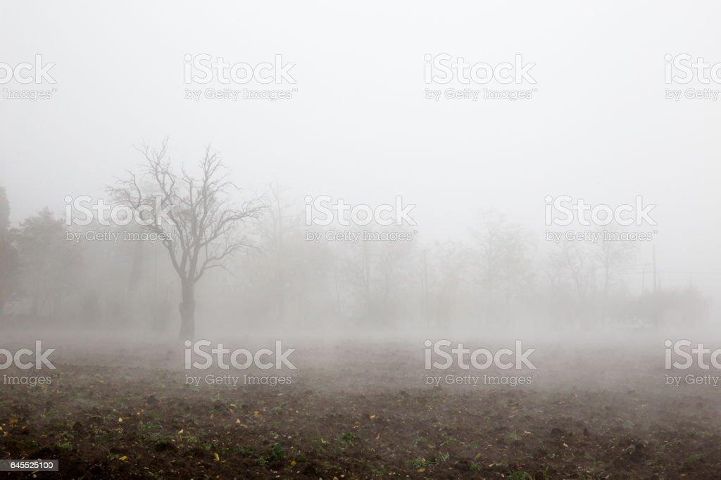 Tree in the fog stock photo