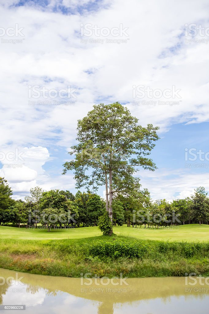 tree in the golf course stock photo