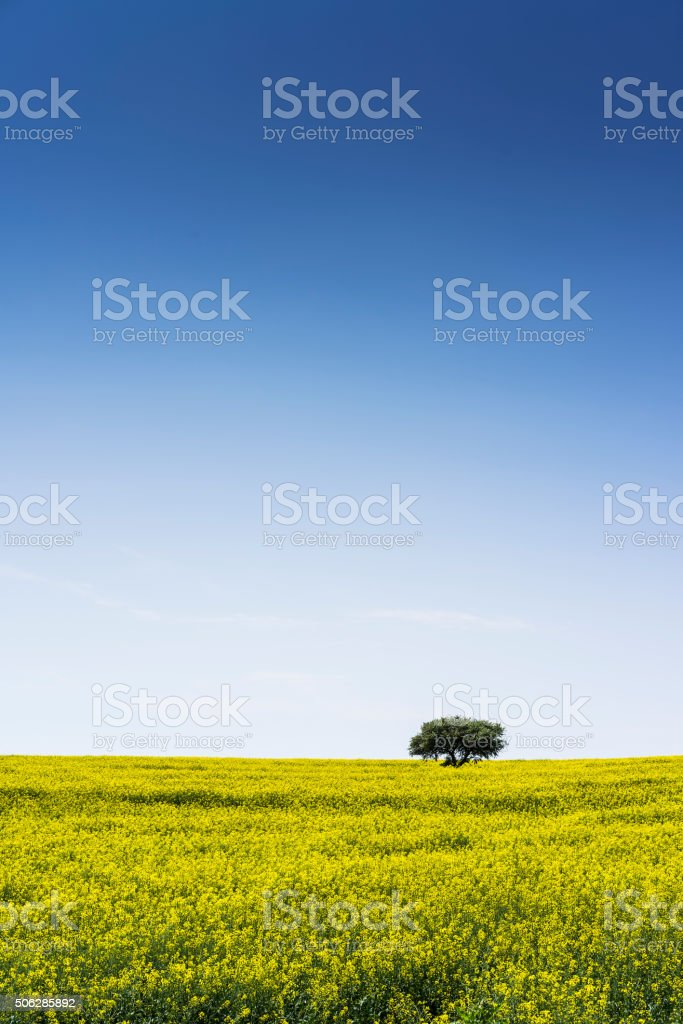Tree in the green field stock photo