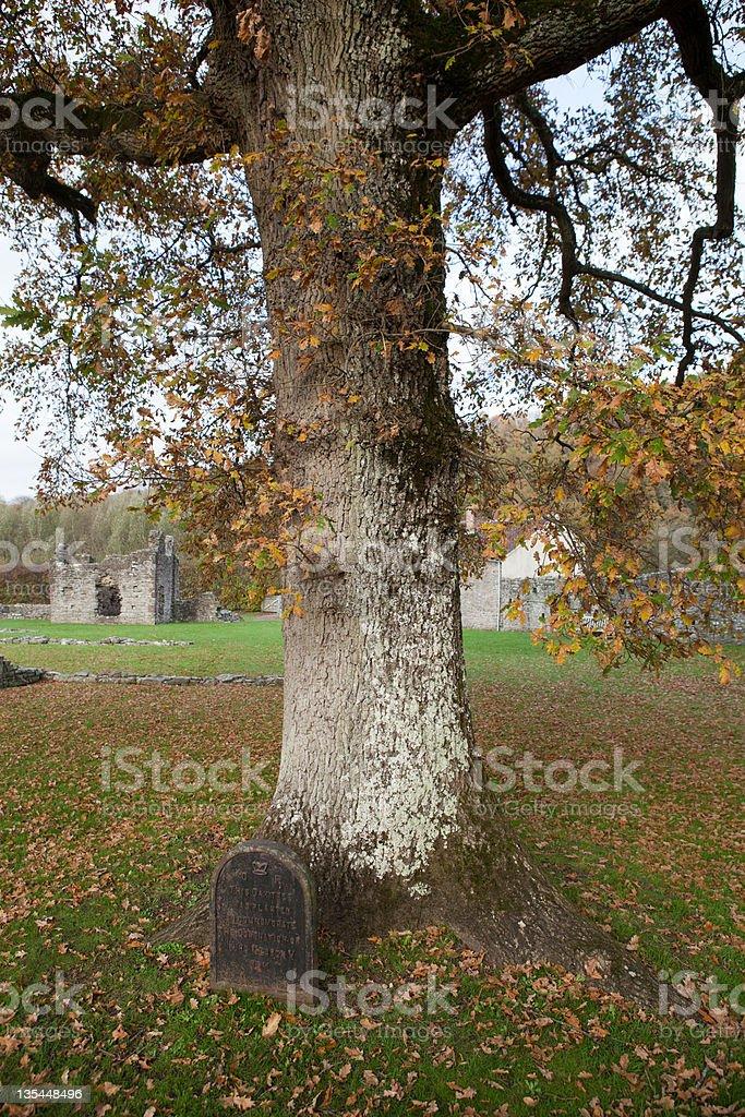 木の敷地のティンターン修道院 ロイヤリティフリーストックフォト