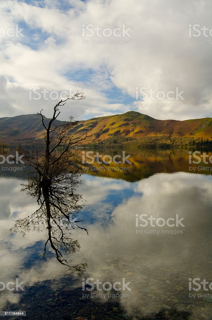tree in the lake stock photo
