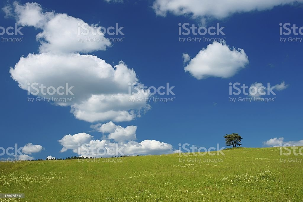Tree in the meadow royalty-free stock photo