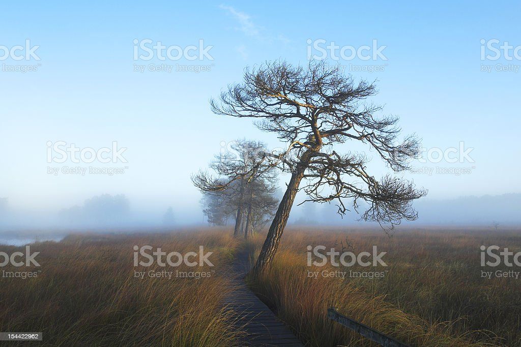 Tree In The Mist royalty-free stock photo
