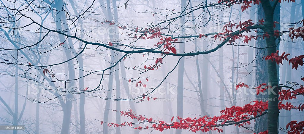 Tree in the misty autumn forest stock photo