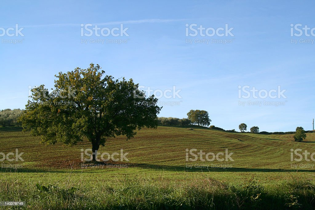 Tree in the park royalty-free stock photo