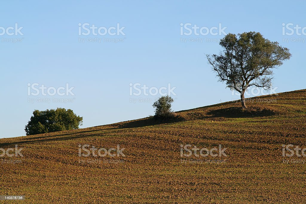 Tree in the plowed field royalty-free stock photo