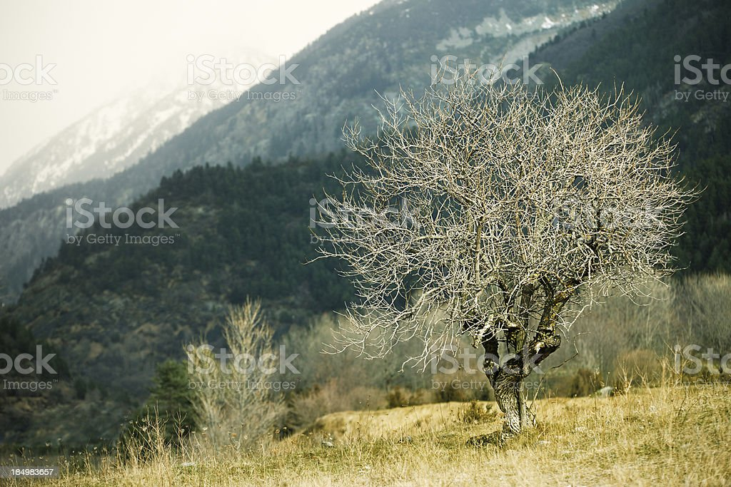 Tree in the rain. royalty-free stock photo