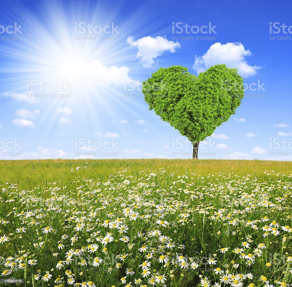 tree in the shape of heart stock photo