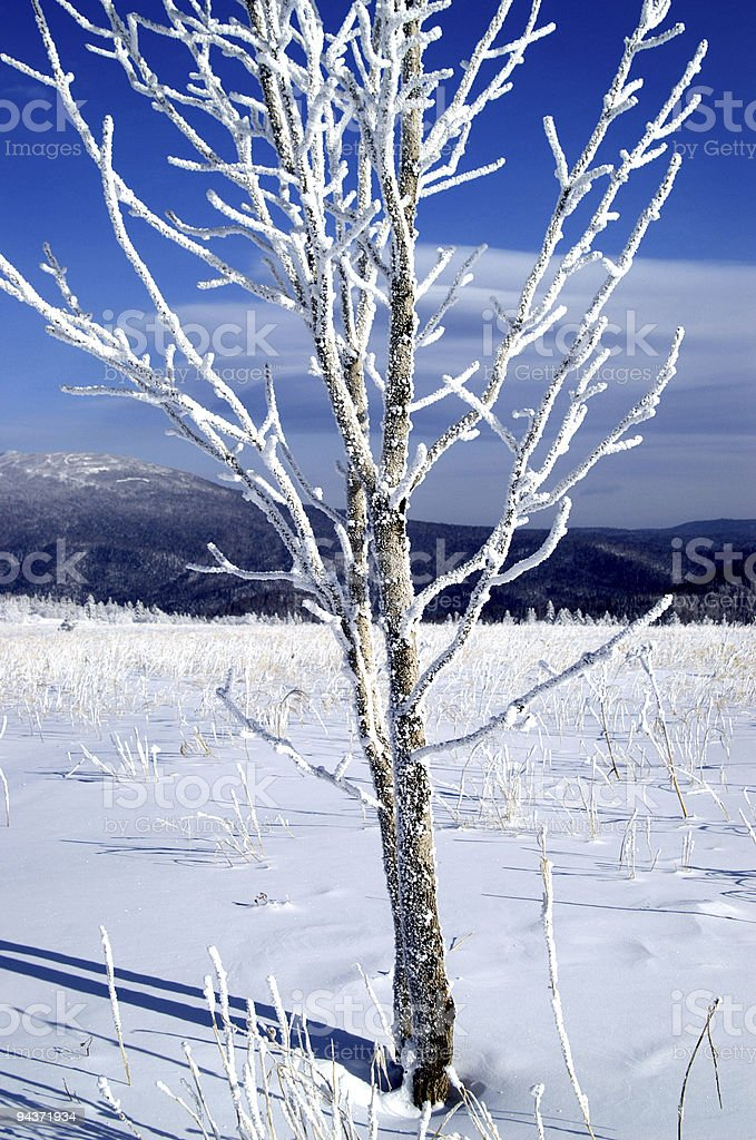 Tree in the snow royalty-free stock photo