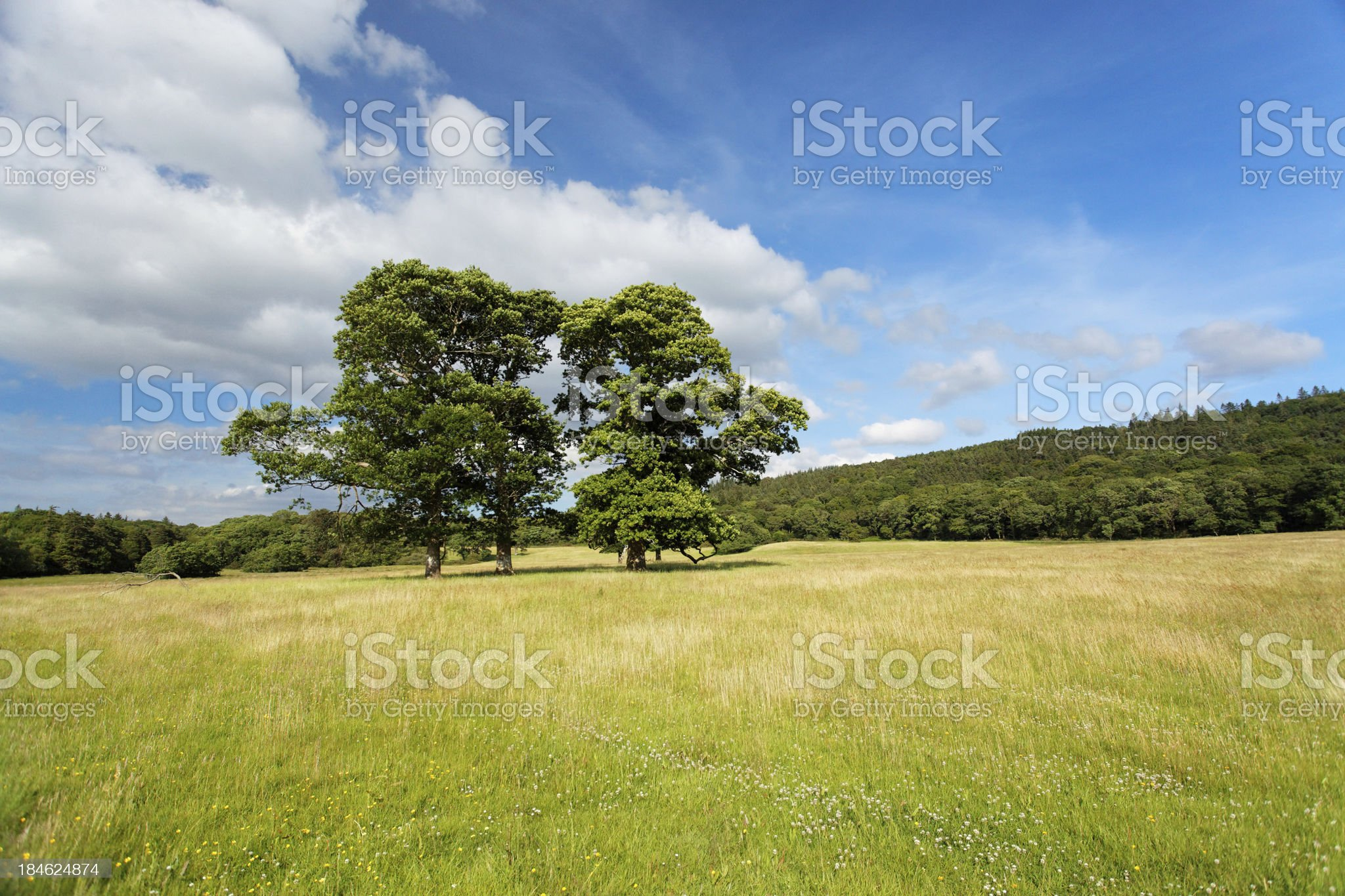 tree in the spring royalty-free stock photo