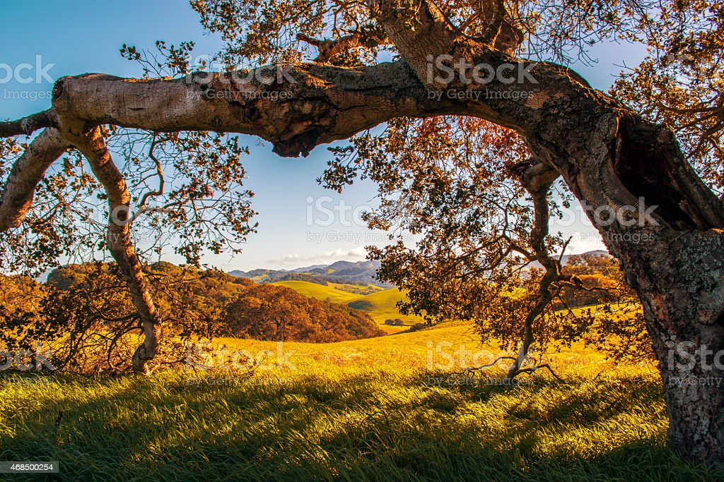 Tree in the Sunset stock photo