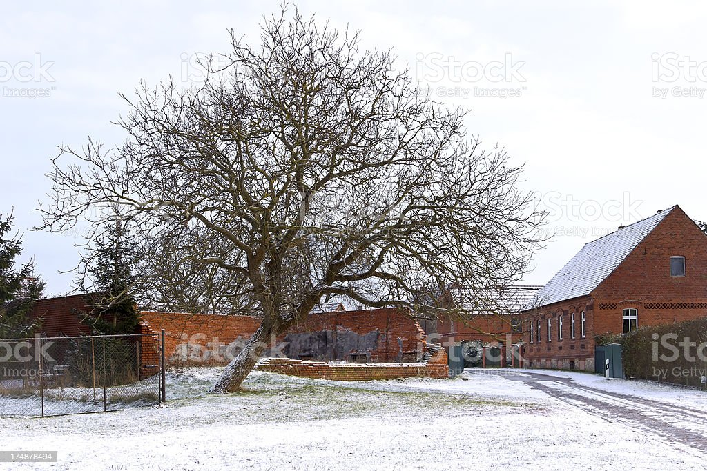Tree in the Village royalty-free stock photo