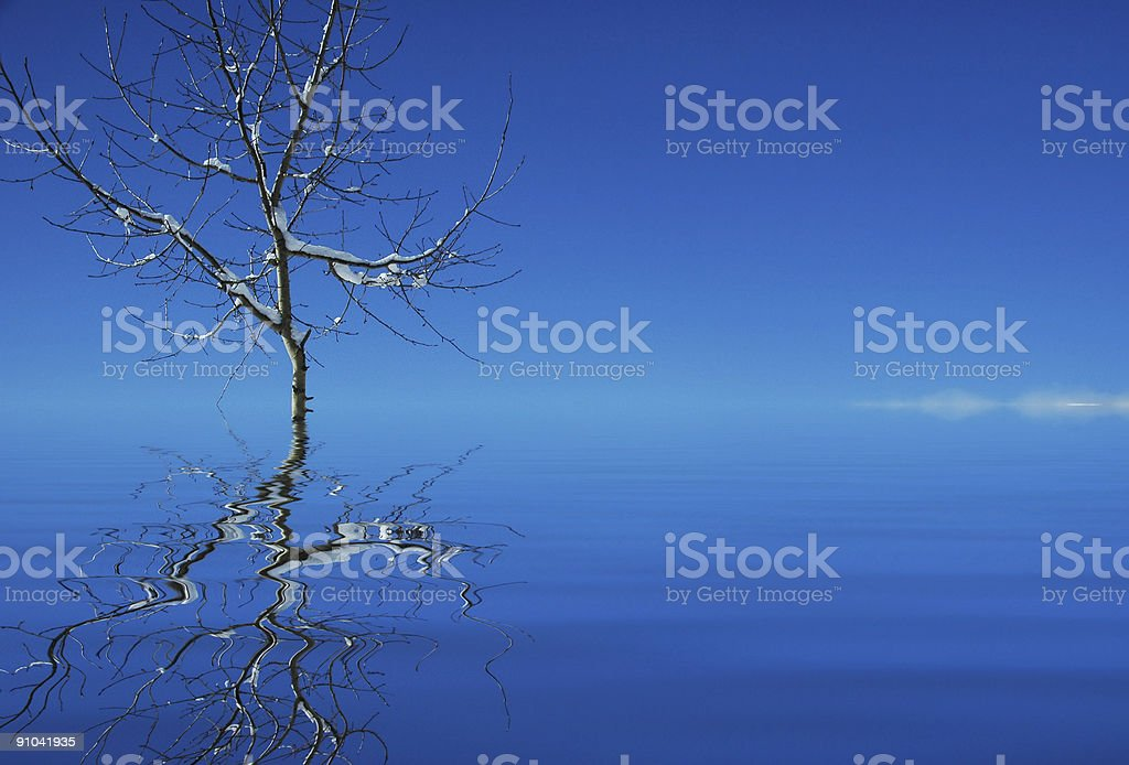Tree in the water and its reflection royalty-free stock photo