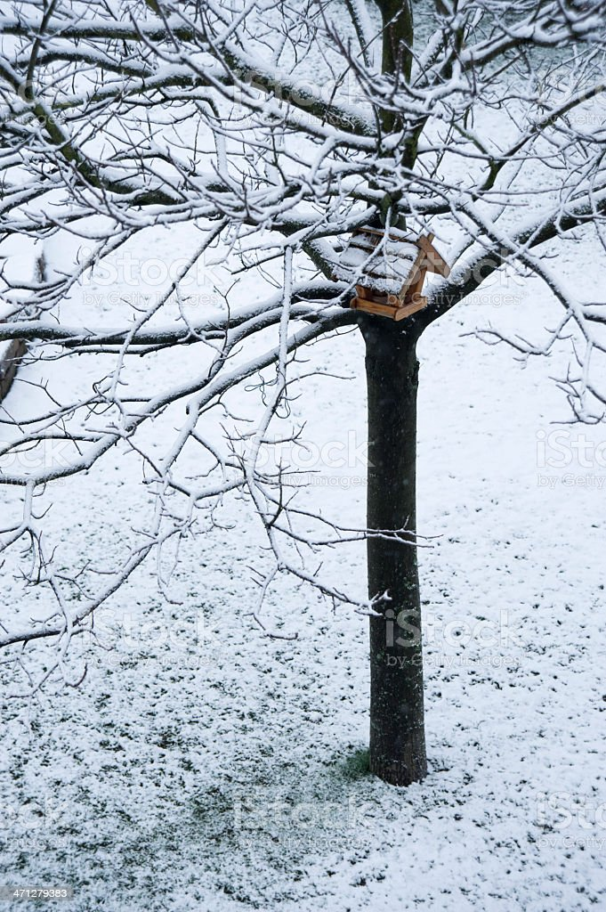 Tree in the winter with bird house royalty-free stock photo