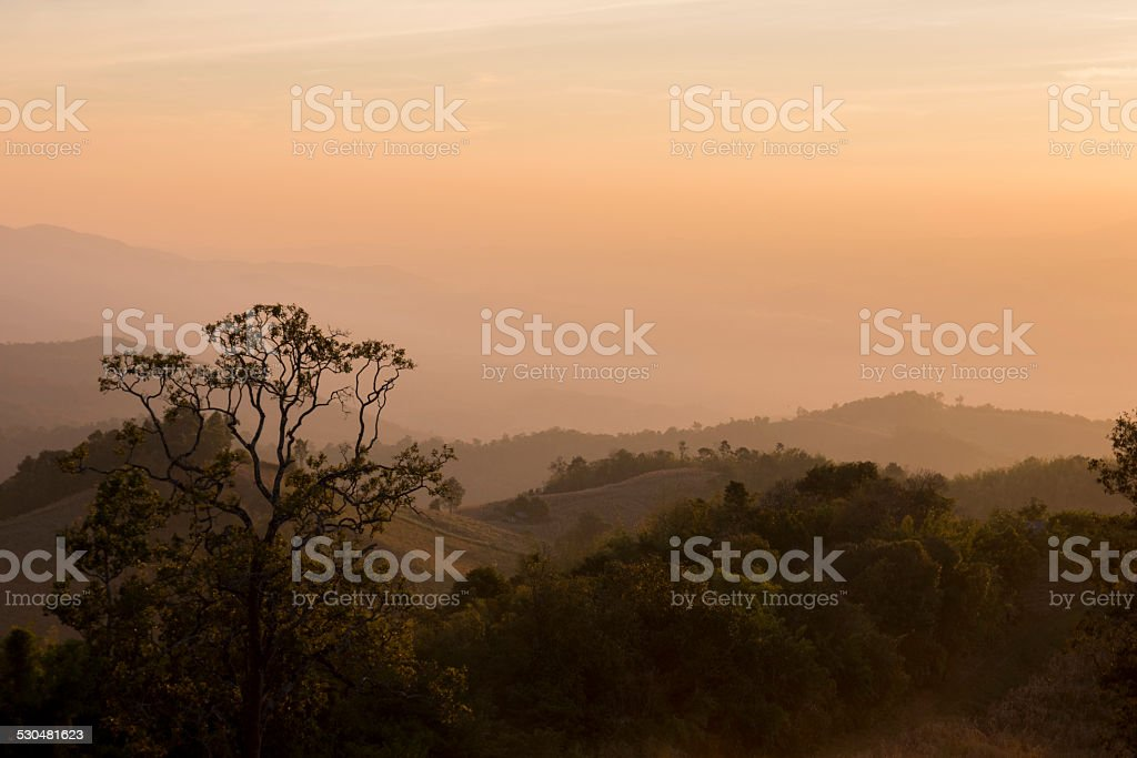 Tree in tropical jungle of Thailand stock photo