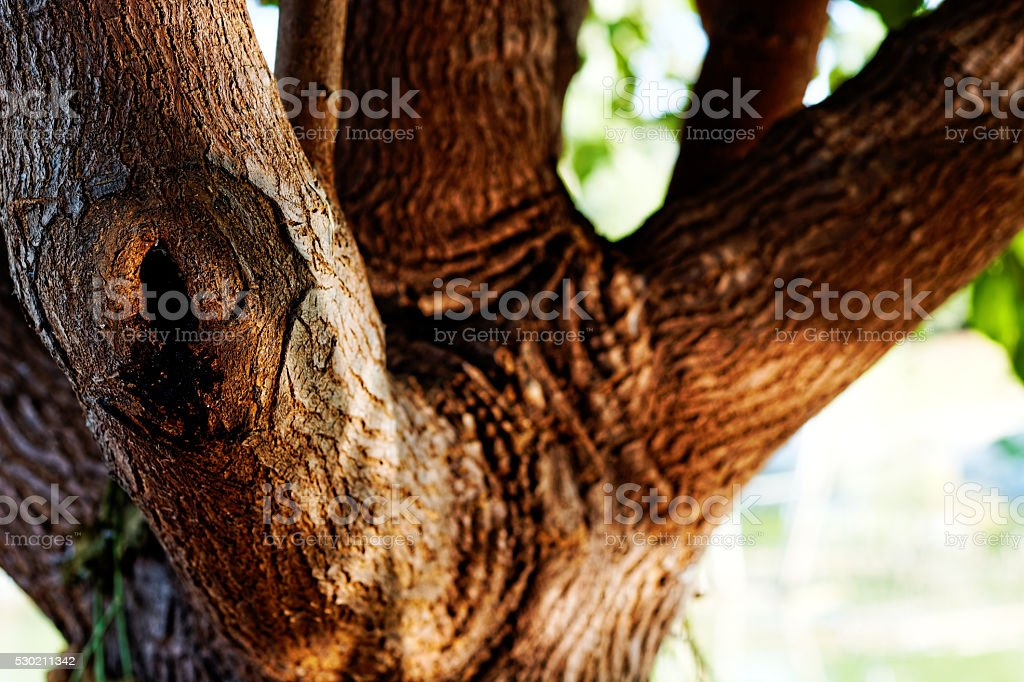 Tree in Utopia Park stock photo