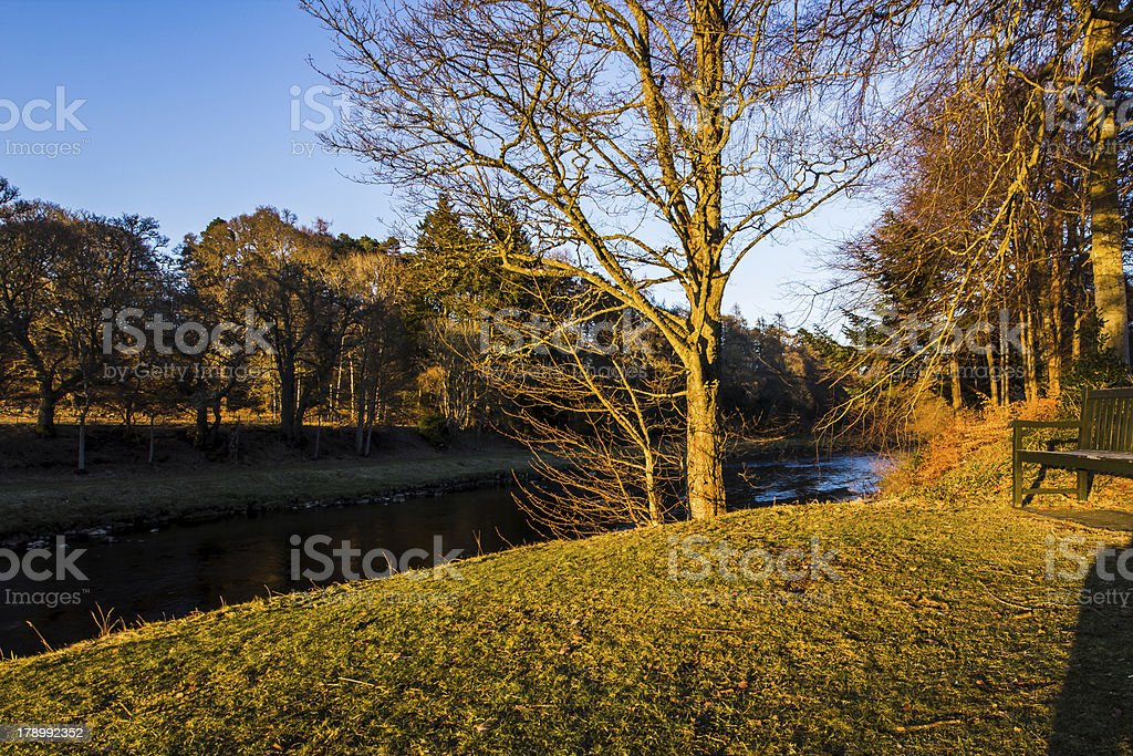 Tree in warm evening light, Scotland royalty-free stock photo
