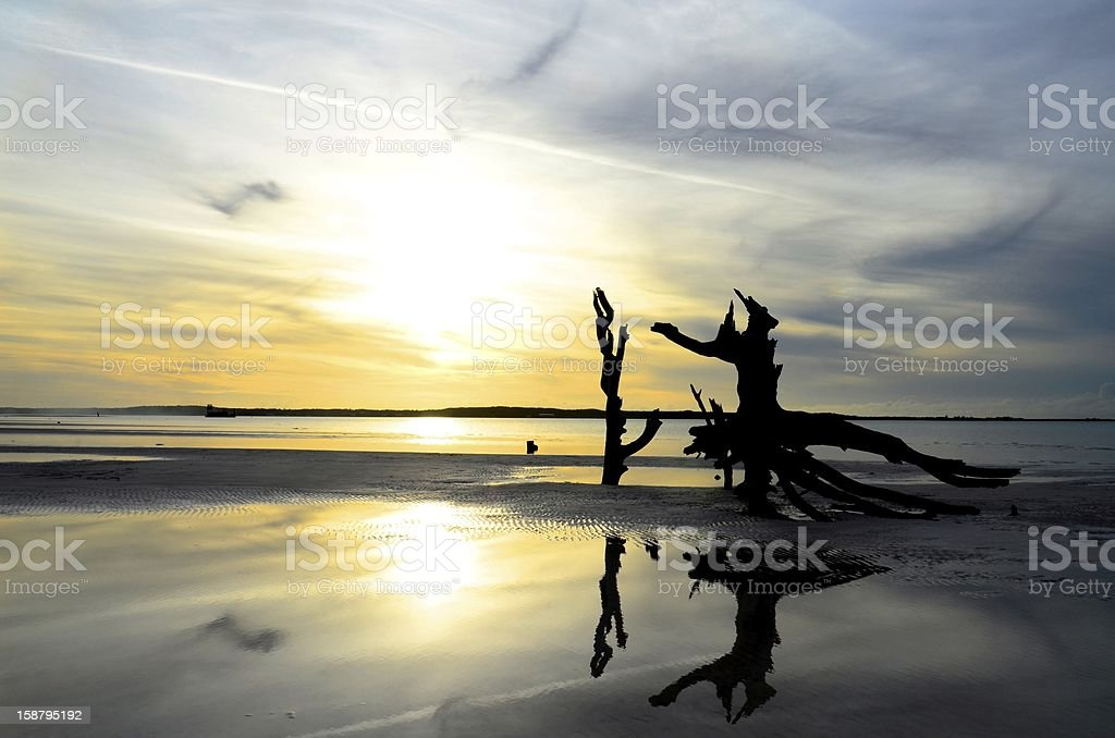 Tree in water at sunset royalty-free stock photo