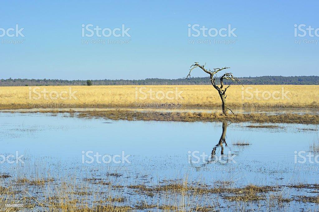 Tree in wetland landscape stock photo