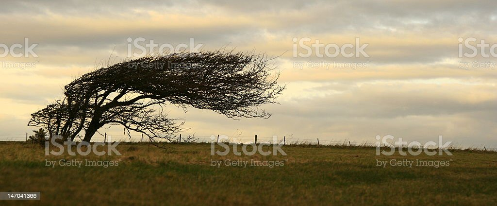 Tree in Wind stock photo