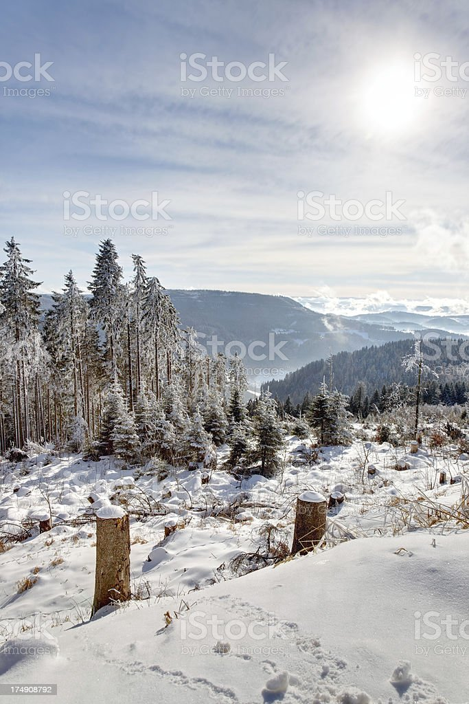 tree in winter landscape with blue sky and sun royalty-free stock photo