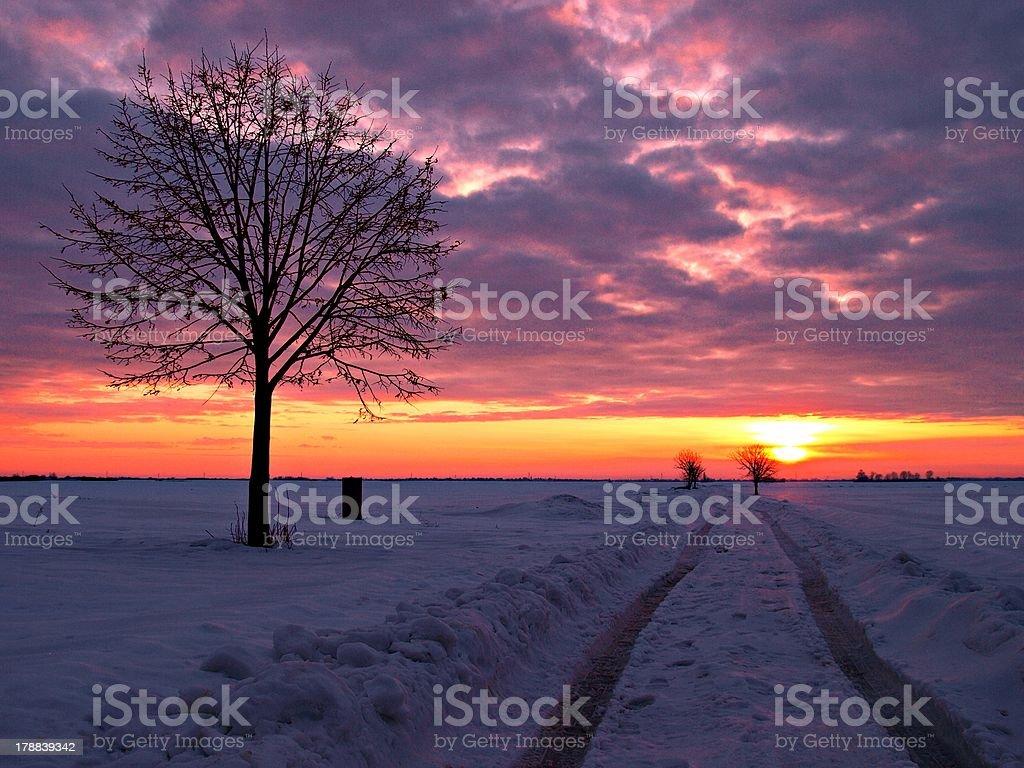 Baum im winter Abend. Lizenzfreies stock-foto