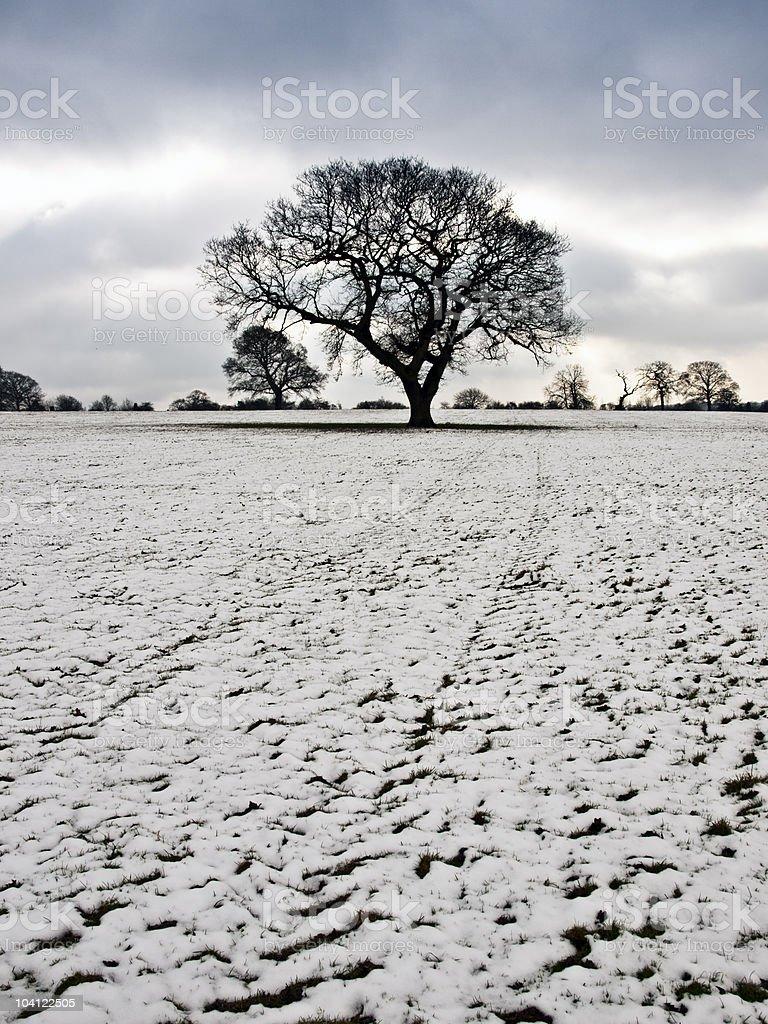 tree in winter snow stock photo