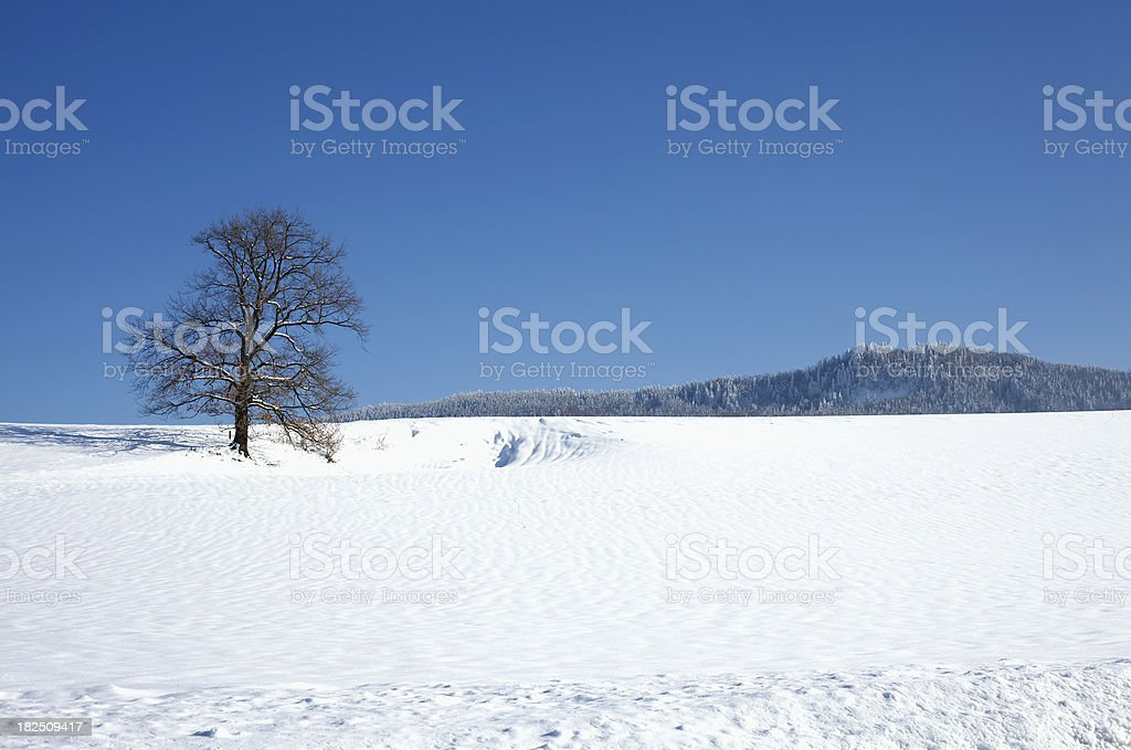 tree in winter with snow stock photo