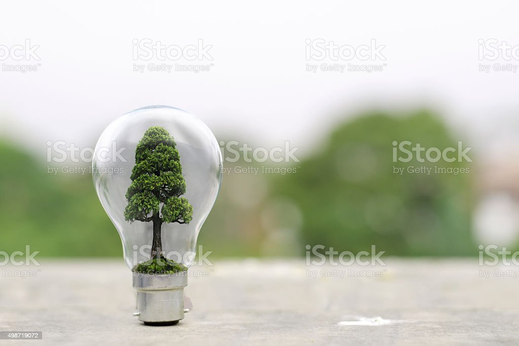 Tree inside lightbulb stock photo