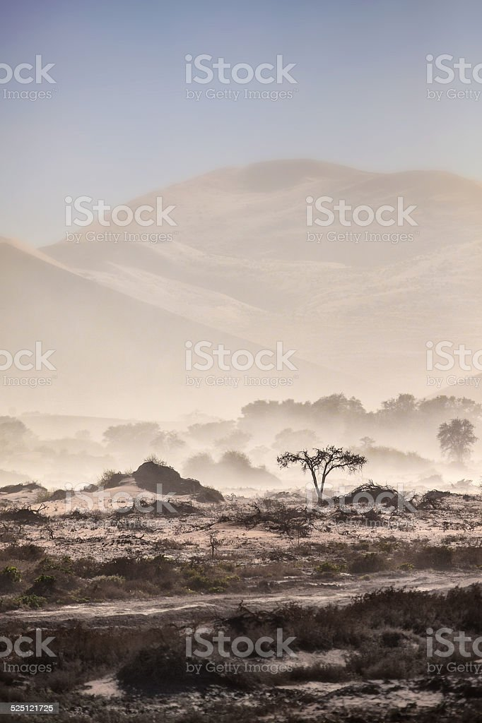 Tree is a sand storm stock photo