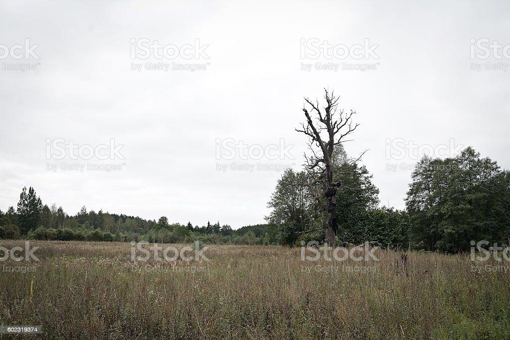tree is struck by lightning stock photo