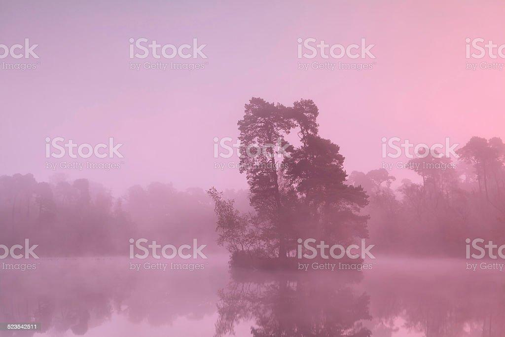tree island on lake in sunrise fog stock photo